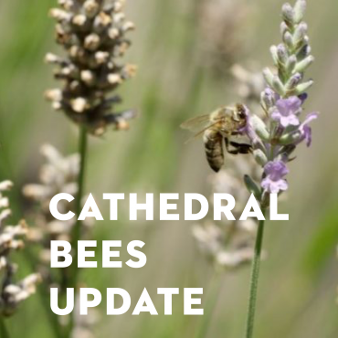 Cathedral Bees Update—Fall 2020